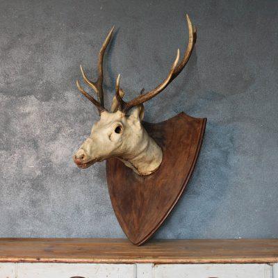 Trofeo cervo sbiancato