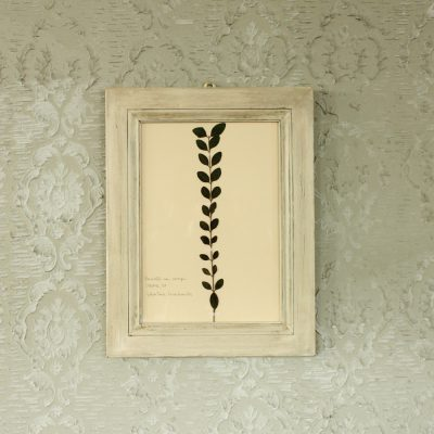 Quadro bianco con foglia di acacia