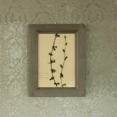 Quadro grigio con fiore di cicoria