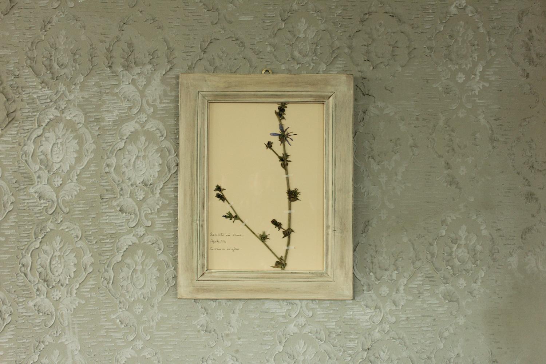 Quadro con cornice bianca e fiore di cicoria