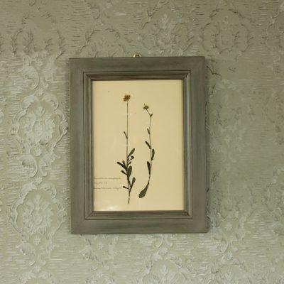 Cornice grigia con fiori di margherita