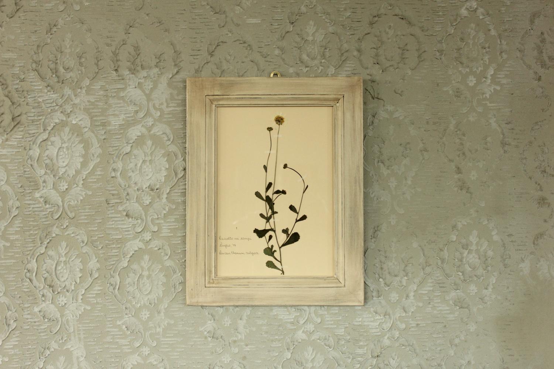 Quadro con cornice bianca e fiore di margherita