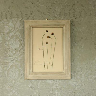 Quadro con cornice bianca e fiori di tarassaco
