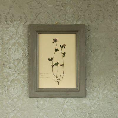 Quadro con cornice grigia con fiore di trifoglio