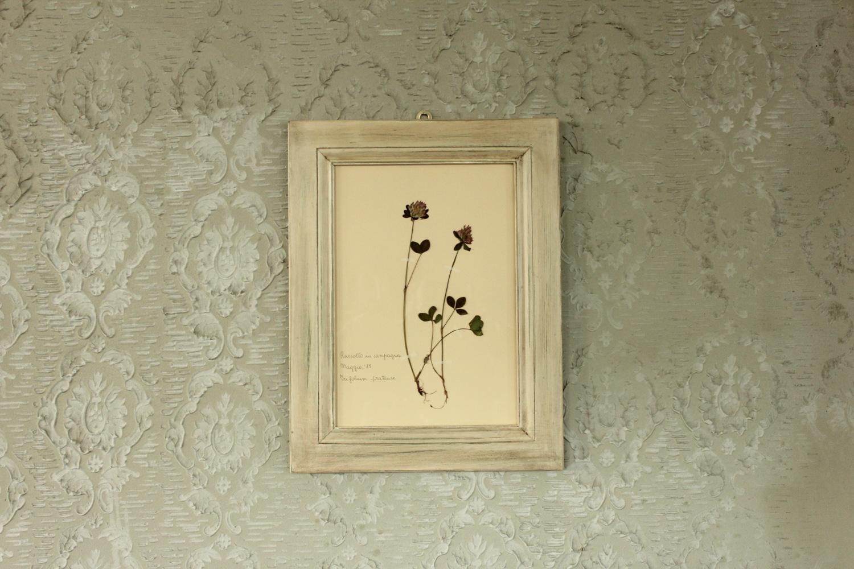 Quadro con cornice bianca e fiore di trifoglio